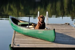 Dog in Canoe on Dock at Lake